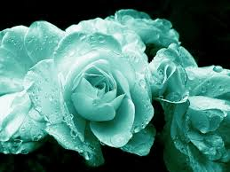 teal roses teal roses with raindrops photograph by jennie schell