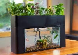 self sustaining garden aquasprouts self sustaining garden aquarium