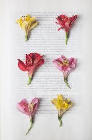 pressed flowers pressed flowers craft get ideas