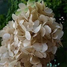 wholesale hydrangeas hydrangeas 12 bunches preserved hydrangea mygen