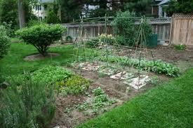 How To Grow A Vegetable Garden In Pots Charming Vegetable Garden For Beginners Photos Beautiful Garden
