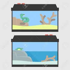 lizard terrarium and turtle paludarium in flat style vector