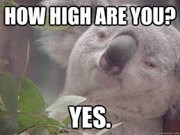 How High Are You Meme - how high are you yes 10 koala quickmeme