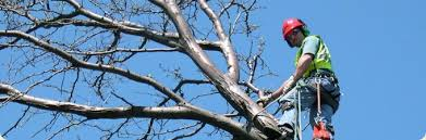 tree services lucas tree experts