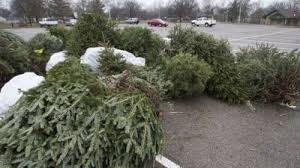 live christmas tree live christmas tree recycling available in marion county through end
