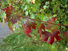 new mexico native plants 9 fantastic colorado fall color trees and shrubs arborscape tree