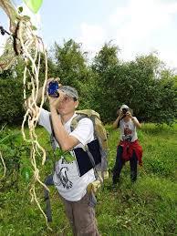 Botanical Garden Internship 72 Best Belize Botanical Garden Caves Branch Images On Pinterest