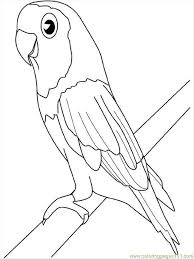 parrot coloring pages coloring design ga 1703 unknown