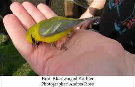 category archives bird feeding solutionsbird feeding solutions