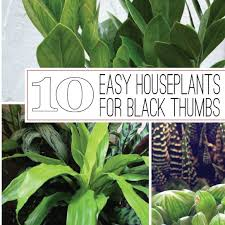small low light plants the rainforest garden 10 of the easiest houseplants for black thumbs