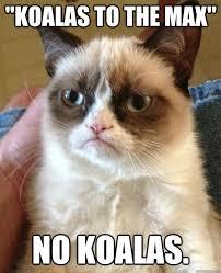 Angry Koala Meme - angry koala more information djekova