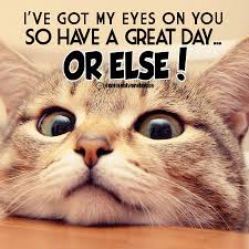 I Got My Eyes On You Meme - i have got my eyes on you comments pics quotes graphics for