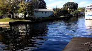 cora canap dolphins in cape coral fl canal paddle boarding with dolphins at