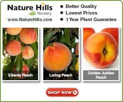 arizona vegetable u0026 fruit gardening for the arizona desert