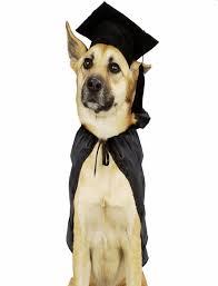 dog graduation cap and gown graduation cap