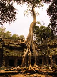 tree at ta prohm temple photos of cambodia and south east asia
