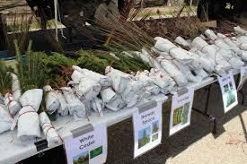 tree seedling salevan buren conservation district
