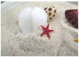 decorative sand free shipping 500g lot home decoration natural white coral sand