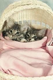 cute basket buddies wallpapers 8181 best cats cats cats images on pinterest cats kitty cats