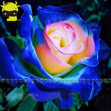 blue seed compare prices on bonsai blue rose online shopping buy low price