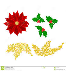 christmas decoration poinsettia holly and gold leaves vector stock