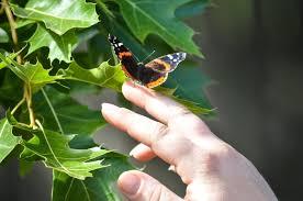 just a r r catching butterflies