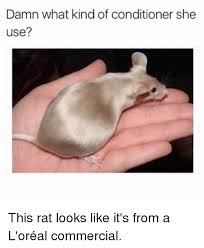 Rat Meme - damn what kind of conditioner she use this rat looks like it s