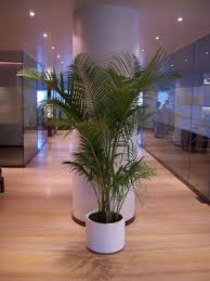 indoor plants india why indoor plants by ankur plant nursery at mumbai india