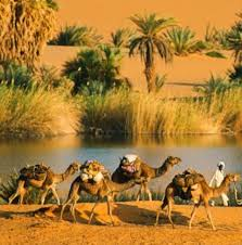 thar desert animals sahara desert oasis animals u0026birds pinterest