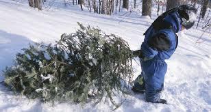 southeast wyoming christmas tree farms choose and cut christmas