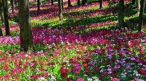 flower garden wallpaper free 4k wallpapers