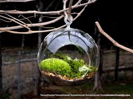 hanging glass globe diy moss terrarium kit live assorted moss