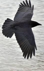 Bird Wing - best 25 bird wings ideas on reference