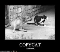 Copy Cat Meme - copycat is a meme but it is a lolcat meme research discussion