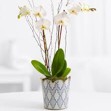 orchid delivery orchid flower delivery proflowers