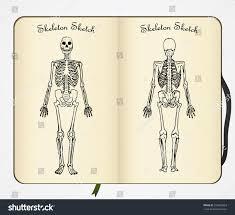 skeleton sketch vector front back view stock vector 316803653