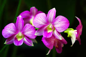 flower orchid how to care for orchids flower inspirationseek