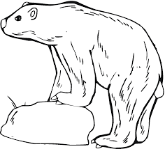polar bear coloring pages christmas coloringstar