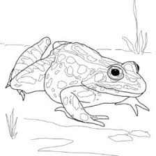 tomato frog coloring kids drawing coloring pages marisa