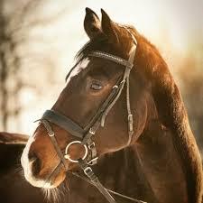 pferdesprüche pferdesprüche pferdesprueche
