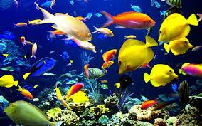wallpaper ikan bergerak untuk pc wallpaper bergerak 49 images