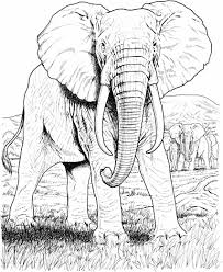 hard coloring pages luxury coloringdifficulthiddenanimals hidden
