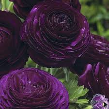 best 25 purple flowers ideas on pinterest purple flowering tree