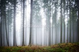 tree wallpaper forest wallpaper murals wallsauce usa morning forest mist mural wallpaper