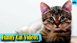 exotic animals animal video wild animals rainforest animals rare animals