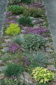 Scottish Rock Garden Forum by 7 Best Garden Rock Gardens Images On Pinterest Garden Ideas