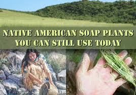 native american plants native american soap plants you can still find and use today
