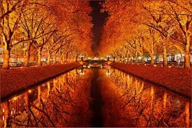 miscellaneous reflection colors tree golden leaves mirrored