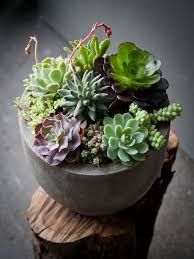 Succulent And Cacti Pictures Gallery Garden Design Decoration Modern White Planter Succulents In Terracotta Pots