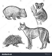 koala bear wombat echidna dingo dog stock vector 641054272